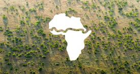 Gran Muralla Verde de África / THE GREAT GREEN WALL