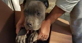 El perro abandonado por el niño que le protegió de su propio padre / FACEBOOK